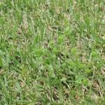 ノミノツヅリ (1)